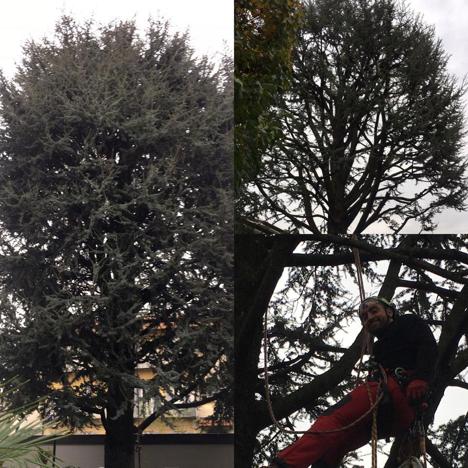 potatura treeclimbing